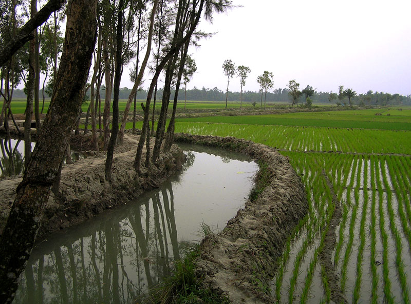 West Bengal, Government of India, Asian Infrastructure Investment Bank, AIIB, Irrigation, Flood management, Damodar Valley Command Area, West Bengal Major Irrigation and Flood Management Project, Climate change, Groundwater, Desilting
