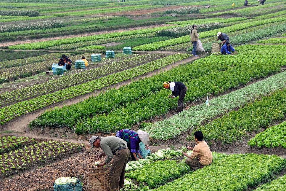 Karnataka CM to pump Rs 39,300 cr to boost agri sector